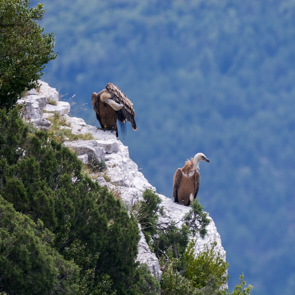 Portfolios : faune