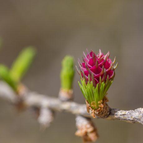 floresite10mordefroid